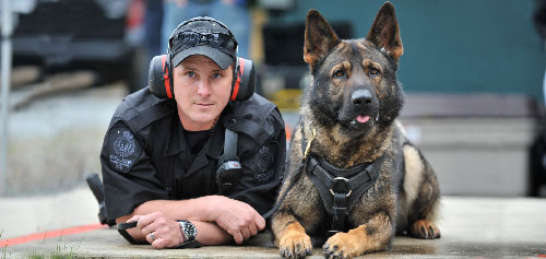 Dog of police